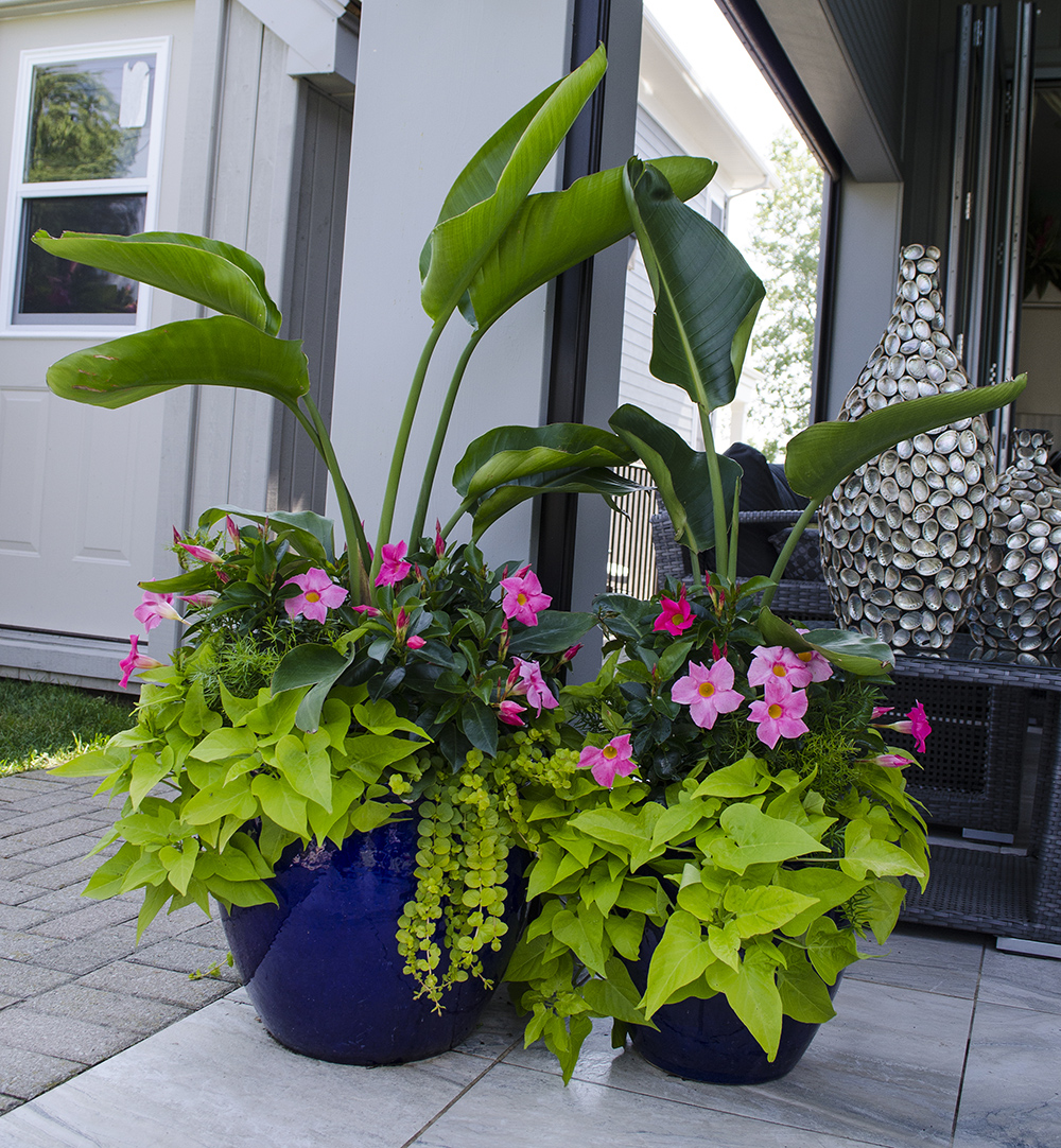 Merveilleux Tropical/Patio Plant Services